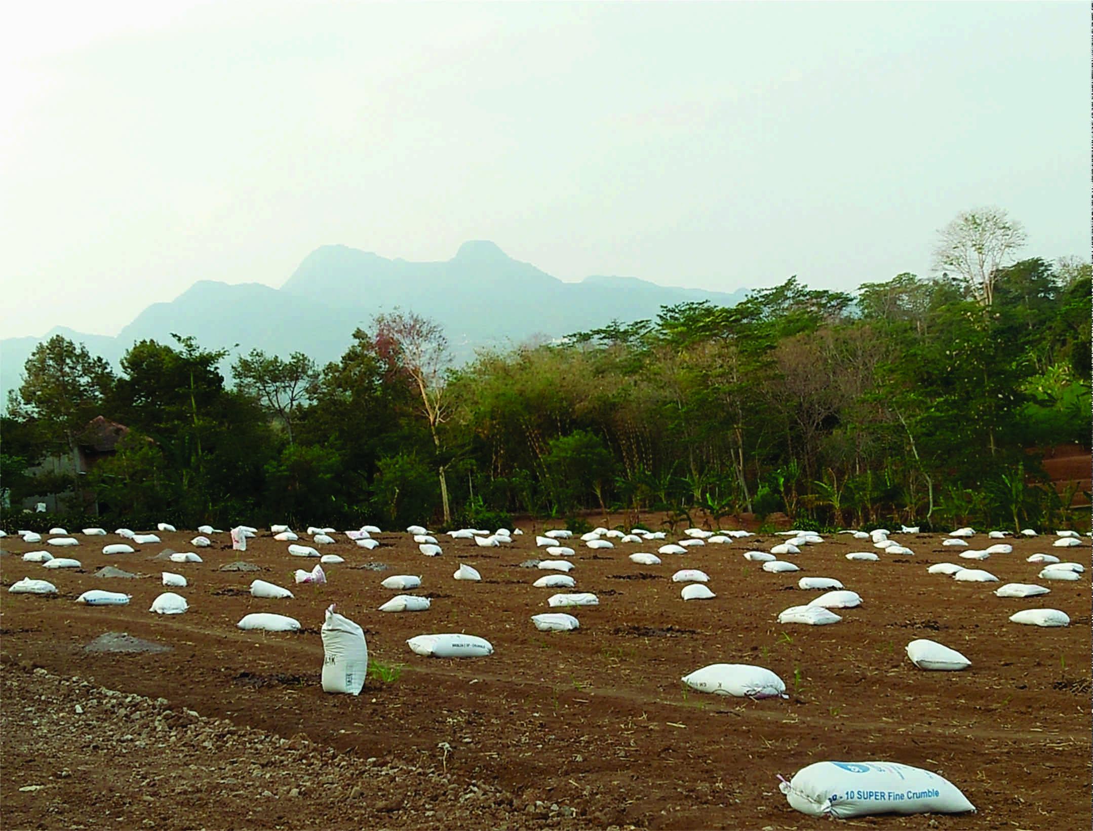 Warga Kandangmas siap menanam kencur.